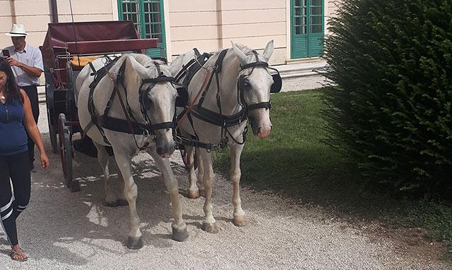 lovas fogat Sopron